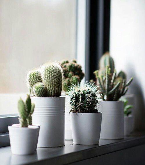 Kunstplanten cadeau