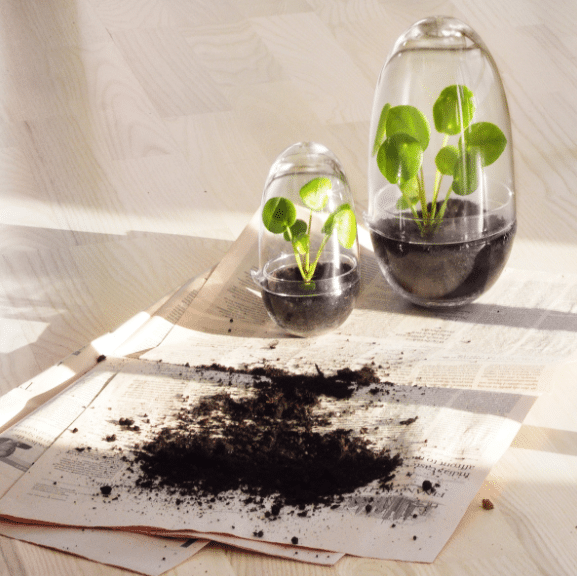 Plant terrarium cadeau